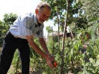 Gemlik'te organik hasat