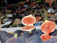 Bursa'da siyah incir festivali