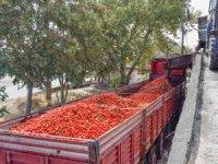 Salçalık domates karaborsa
