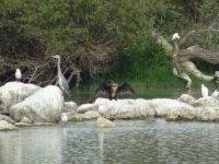 Uluabat'ta tehlike çanları