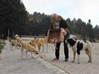 Uludağ'daki hayvanlara veda etti