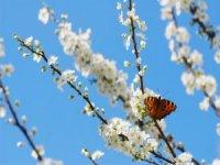 Bahar aylarında elektrikten tasarruf edilebilir