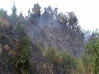 """""""Ormanda ateş yakmak yasaktır"""""""