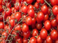 Rusya'ya Türk domates ihracatı arttırıldı