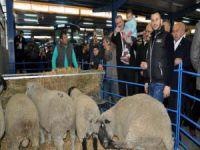 Karacabey Gıda, Tarım ve Hayvancılık Fuarı açıldı
