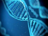 DNA tamiri ile sağlıklı yaşlanmak mümkün!
