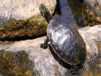 Genital bölgesinden ölü kaplumbağa çıktı!