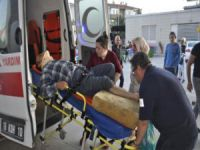 Ceviz toplarken ağır yaralandı