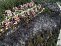 Yangın sonrası ormanda temizlik
