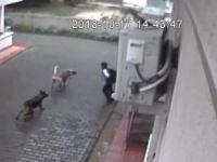 Çocuğa saldıran köpekler sahipli çıktı!