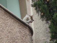 İtfaiyenin kediyle imtihanı