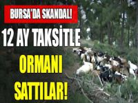 Bursa'da skandal! Taksitle orman sattılar!