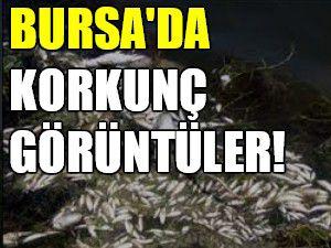 Bursa'da korkunç görüntüler!