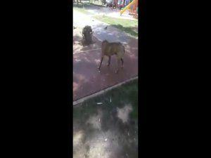 Hayvanseverlerden Nilüfer Belediyesi'ne tepki!